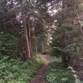 Trail to group campsites