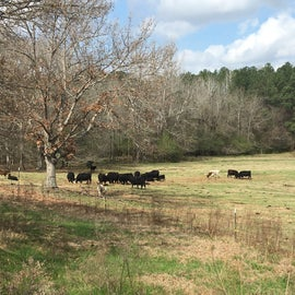 Here's the cow field next to the campground