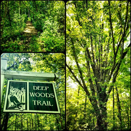 Some great hiking around the campground!