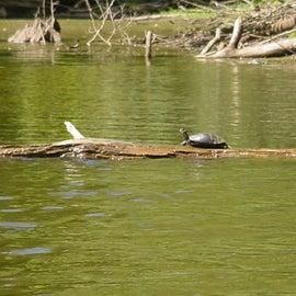 turtles while kayaking