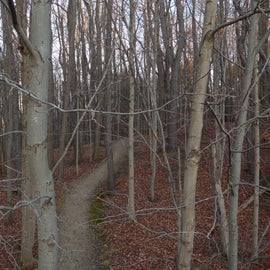 The west woods - view of the trail from the wildlife viewing deck/sunset overlook (from a fall hiking outing).