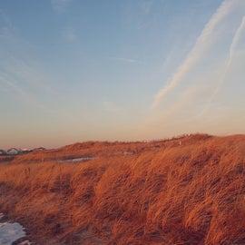 Beautiful sea grass along the beach at sunset