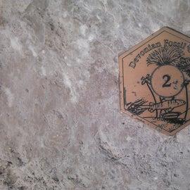 Devonion Fossil Gorge scavenger hunt