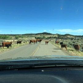 Local traffic jam...