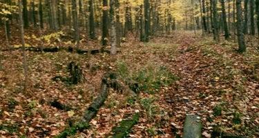 Forest Glen County Preserve