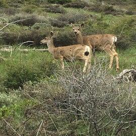Deer while hiking