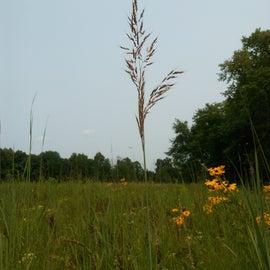 Tall grass on the prairie trail
