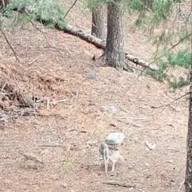 Mother deer and 2 fowl