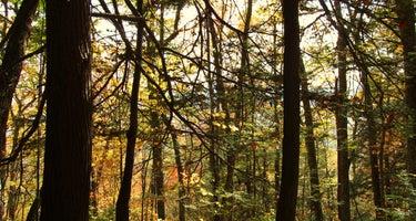 Laurel Ridge Campsite