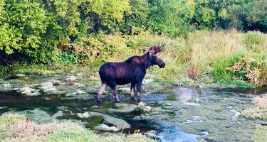 Little Deer Creek - Wasatch Mountain State Park