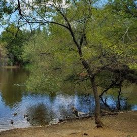 South Shore, Lynx Lake