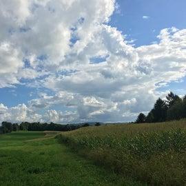 Walking through the pastures