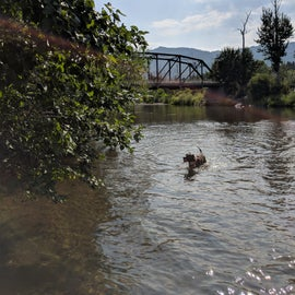 Pups and humans both can enjoy the nearby Truckee River.