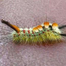 Cool Caterpillar