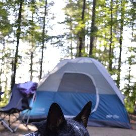 Musky Lake Campground Site
