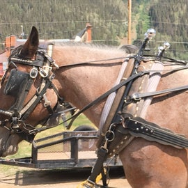 Stagecoach rides are available in Silverton