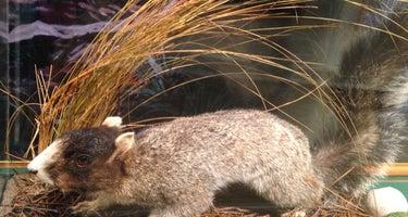 Carolina Sandhills National Wildlife Refuge, Permitted Camping