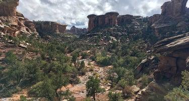 Elephant Canyon 1 (EC1)