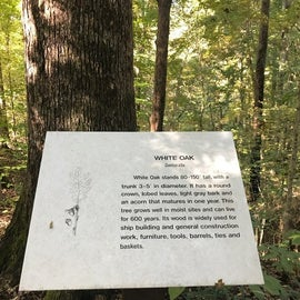 One of the many tree markers on the Bear Creek Loop