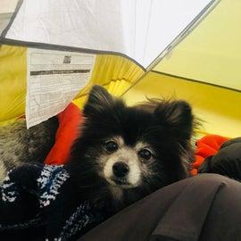 Cornelius is not a tent camper