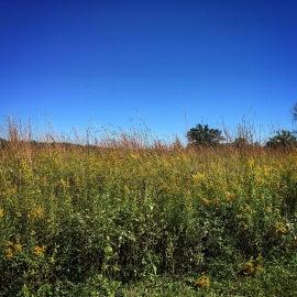 Native prairie hike at Langwood