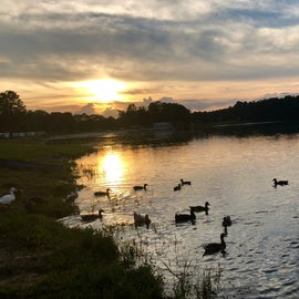 The Duck Families of Lake Leamon Campground