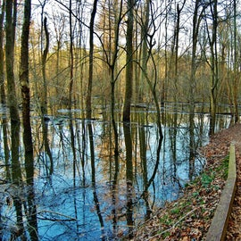 Some of the areas are often flooded, and this trail runs beside a flooded tributary of the Neuse river.