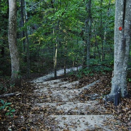 Despite being in the coastal plain, the trails are not always flat.