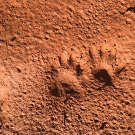 Traces of little critters