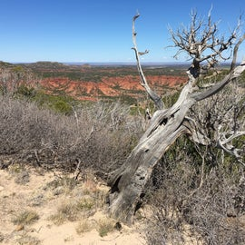 Wind blown tree at scenic overlook