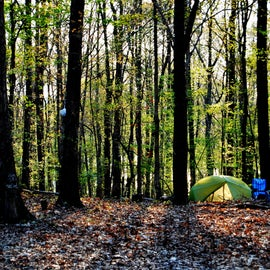 Our Primitive Campsite without tent pads