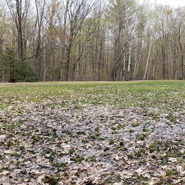 A closer look at the wet central field, particular at the entrance to the area