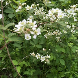 Those wild roses are all over the property