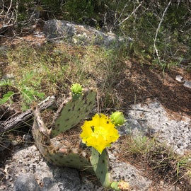 Cactus and wildflowers are beautiful