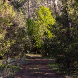This road leads to the last camp site in the area.