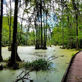 This is just one of the boardwalks at Merchants Millpond.