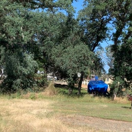 No trees here. Just a wire fence separating camp sites from trashy trailer park.