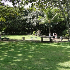 Picnic tables and grills on property for use