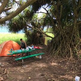 Our peaceful hala tree home