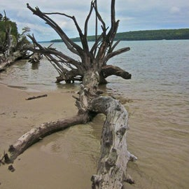 down on the beach- cool drift wood abounds!