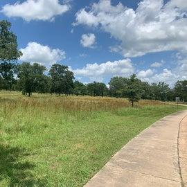Wildflower pastures