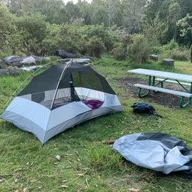 our site at hosmer grove