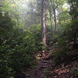 Laurel cove trail