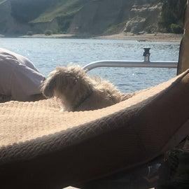 Mr Stuffy, 15, enjoyed the view