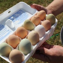 Farm fresh eggs!!