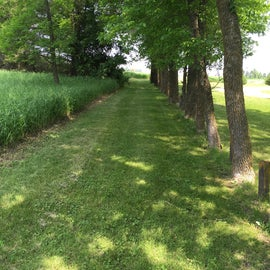 The mown trail connecting the two halves of he park