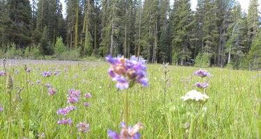 Yuba Pass Campground