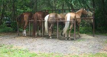 Cataloochee Horse Camp
