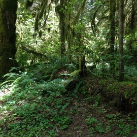 Ferns at Horse Creek