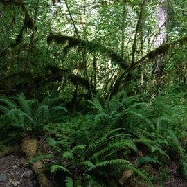 Lots of green at Horse Creek